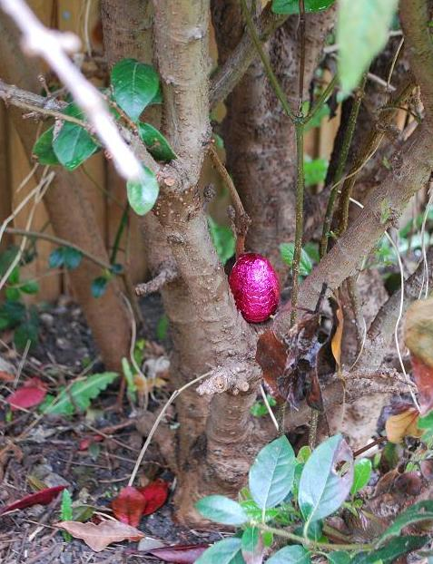 Egg in tree
