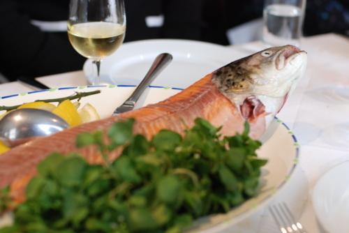 Salmon_trout